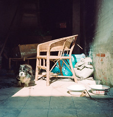 Untitled(6)fb1 (飞鸿留影) Tags: rolleiflex rolleiflex35f carlzeiss china streetshot snapshot planar tlr mediumformat squareformat 120 6x6 film filmpohotography planar7535 portrait people rollei kodak kodakfilm analog analogphotography negative negativefilm portra160vc bokeh carlzeisslenses zeisslenses zeiss wuxi nikonsupercoolscan9000ed color colorfilm dog