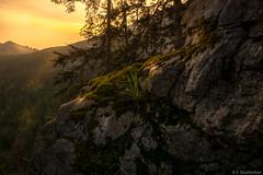 Sunrise in the Alps (tim.sharifsoltani) Tags: sunrise sun landscape landscapephotography mountain alps alpen berge deutschland sonnenaufgang yellow nikon d7100 nikkor 1024mm kampenwand