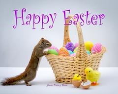 Happy Easter!! (Nancy Rose) Tags: easter squirrel eggs basket chicken eggshells