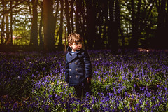 Easter Walk (The Ultimate Photographer) Tags: flowers bluebells field bed forest woodland wood natural nature son boy child toddler essex littlebaddow chelmsford sunday easter walking blue promenade canon 7dmarkii portrait purple happy