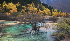 Turquoise Delight - Sichuan Province, China (Thomas J Dawson) Tags: huanglong sichuanprovince fall larch autumn turquoisewater thomasdawsonphotography