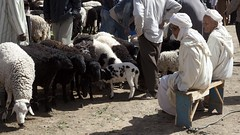 Sheep market in Rissani (dirk huijssoon) Tags: africa desert northafrica islam morocco marokko nkc campertour camperreis nkcrondrit rondritmarokko20144 nedrlandsekampeerautoclub camperreismarokko nkccampertout nkcreis