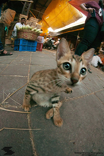 Curious Cat in a vegetable market.