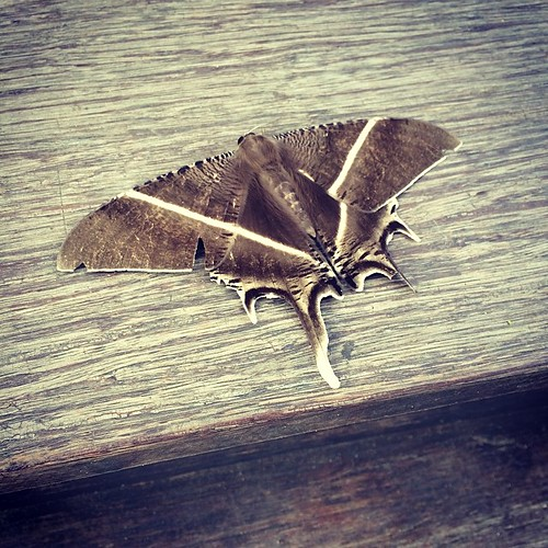 Name this moth or butterfly?