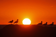 Eyes Right... (John Ibbotson (catching up!)) Tags: sunset sea sun birds wales coast seaside gull cerdigion borth
