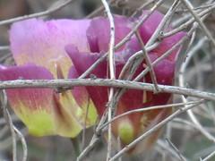 CIMG6438 (kazadmanesh) Tags: و بهار خشکسالی