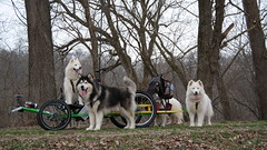"""The WooFPAK (Can You See Jag In the Back Squuezing In to Get In this Picture?) • <a style=""""font-size:0.8em;"""" href=""""http://www.flickr.com/photos/96196263@N07/14197045162/"""" target=""""_blank"""">View on Flickr</a>"""