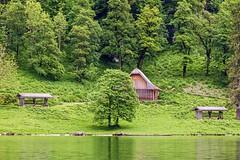 Reitl (Woodpeckar) Tags: green nature germany bayern königssee eos5d wildfütterung berchtesgadenerland woodpeckar 5dii reitl wildlifefeeding