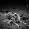 village dogs (1davidstella) Tags: village rustic kudat communal tipofborneo simpangmengayau rungus