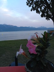 dinner at the lake (CherryWaves*) Tags: sunset lake lago switzerland suisse lac lutry romanticdinner buvettedelaplage