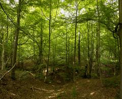 Fort de Soignes (Anne-Laure Kesteman) Tags: plant tree green nature forest canon plante de arbol eos camino belgium belgique natural bruxelles bosque alk brussel arbre chemin fort 550 sonian soignes outdour