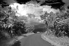 lake taupo lookout 1sw (Bilderschreiber) Tags: newzealand lake nature natur lookout northisland taupo neuseeland nordinsel