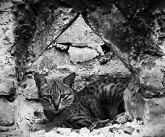 From the archives... (Ravi Singh vats) Tags: cat rest