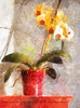 AutoPainter&Snapseed Orchids (c.huller) Tags: painterly orchid autopainter snapseed