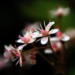 london pride -art (nickcairns2222) Tags: flower london up close pride