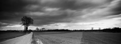 Windy countryside (Fabrizio Zago - Photography and media) Tags: street longexposure trees sky blackandwhite bw panorama cloud streets tree film nature alberi clouds analog 35mm germany deutschland countryside blackwhite europa europe strada nuvole wind natur wolken windy stormy natura panoramic hasselblad campagna cielo land nrw albero xpan baum biancoenero germania analogica vento borken tempesta longexposures agricoltura hasselbladxpan cludy nuvoloso pellicola panoramiccamera erle stradadicampagna agricolture ventoso nd110 coltivazioni kreisborken fabriziozago bwfilternd110 wwwfabriziozagocom fotocamerapanoramica