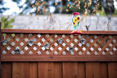 Henry (Nikon_Ed) Tags: bird art 35mm nikon hummingbird 14 sigma dg d4 hsm nikond4 sigma35mm14dghsmart