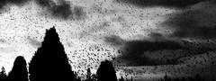 Parvada (Memo Vasquez) Tags: italy rome roma birds italia aves parvada fragmentos memovasquez