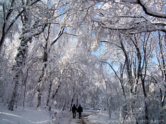 Avala mountain in winter (travelinserbia) Tags: winter mountain forest serbia belgrade avala