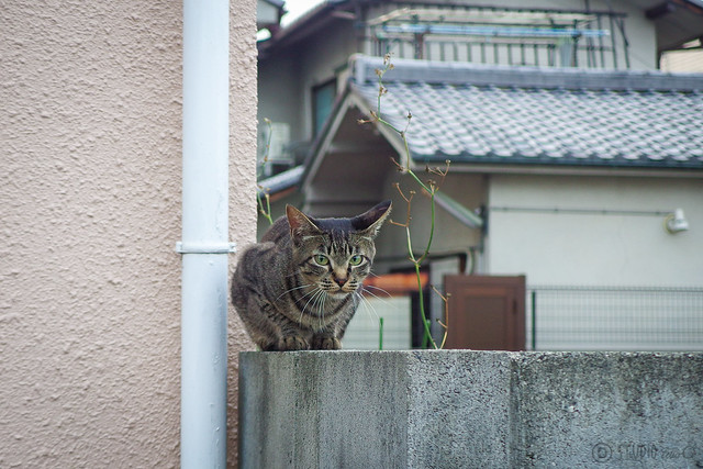 Today's Cat@2014-07-25