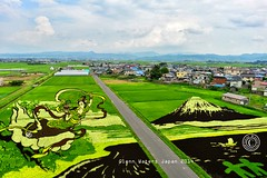 Inakadate Rice Art 2014. Tanbo Art.  Glenn E Waters. Japan 2014. . Over 3,000 visits to this photo. (Glenn Waters in Japan.) Tags: nikon mountfuji getty  fujisan  d800   inakadate  nikond800  glennwaters riceart   tanboart