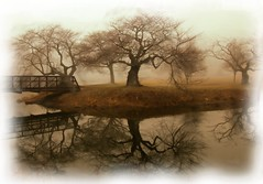 Trio Dreams (chantsign) Tags: watercolor trees bridge dreamlike branches misty morning brown green water reflection