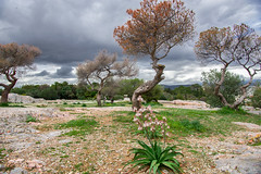 Pnyx (Athens, Greece)........birthplace of democracy (jen.ivana) Tags: athens tree olive flower day outdoor clouds sky city town rock plain green rain hank you much