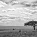 Tarangire National Park Photo Safari