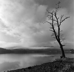 Loch Ard Tree (The Boy Blunder) Tags: scotland bronica sqa 50mm ilford fp4 winter wideangle lochard