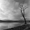 Loch Ard Tree (The Boy Blunder) Tags: scotland bronica sqa 50mm ilford fp4 winter wideangle lochard