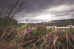 DSC_5584 (valeryzyuz) Tags: scotlanda