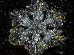 11Feb17D (peterobrien186) Tags: pleochroic polarization crossed snow crystal ice winter macro
