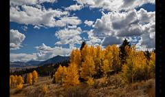 Aspen Grove in Colorado (Whitney Lake) Tags: yellow orange clouds rockymountains rockies mountains autumn fall aspen colorado