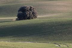 Winter field (ramosblancor) Tags: naturaleza nature paisaje landscape dehesa field cerealdeinvierno wintercereal encina holmoak quercusilex madrid españa spain