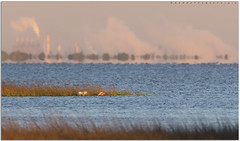 Spoonbills and Galveston Island (MOBirdographer) Tags: galvestonisland galveston texas springbreak featherfest