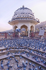 Amber Fort, Jaipur (usaid.d4s) Tags: summer holiday trip nikon nikkor 2470m f28 low iso sky pigeon bird fly wings fort amber amer jaipur india incredible fun family