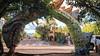 San Cristóbal Island, Galápagos Islands (Quench Your Eyes) Tags: charlesdarwin galapagosislands islasgalápagos pacificocean thegalápagosislands westernhemisphere biketour bikepacking ecuador island santacruz southamerica thegalapagosislands travel wildlife sancristóbalisland art streetart wallart
