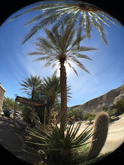 Palms and Sun (Jeffrey Sullivan) Tags: olloclip fisheye iphone 6s death valley mobile phone cellphone camera images iphoneography california usa apple photo copyright 2016 jeff sullivan march unitedstates