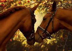 PFERDE (Gila98) Tags: pferde horse love natur tierliebe tiere farbe farbig
