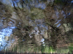 Exploding Forest (andressolo) Tags: water reflection reflected reflejos reflect reflections reflejo stream distorted distortion distortions abstract agua trees explosion