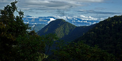 Cloud Forest in Tandayapa/Mindo region, north-western Ecuador. (cbrozek21) Tags: cloudforest jungle forest trees clouds sky tandayapa mindo ecuador landscape panorama nature southamerica pentaxart