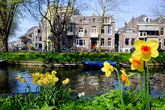 Spring @ Utrecht (PaulHoo) Tags: utrecht water canal gracht city urban fujifilm fuji x70 color flora building architecture cityview spring tulip narcissus 2017 cityscape holland netherlands