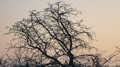 DSC02186 (ES_789) Tags: fellbach winter reif morgen