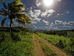 En plein soleil ! (Livith Muse) Tags: chemin arbre nuage montagne soleil paysage champ petitbourg guadeloupe glp