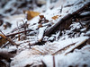 frost (fromexquisiteperspectives) Tags: frost snow winter nature twigs sticks