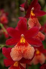 Orchidea - Orto Botanico - Palermo (dona(bluesea)) Tags: orchidea orchid ortobotanico botanicalgarden palermo sicilia sicily italia italy