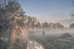 Sunrays Through Fog (Martine Lambrechts) Tags: sunrays through fog sunrise tree morning nature landscape