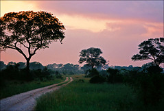 Kruger, March 2017 -  Sunset (Katarina 2353) Tags: bush kruger southafrica katarina2353 katarinastefanovic