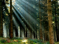 Forest Light (acwills2014) Tags: forest floor forestfloor shaft beams light