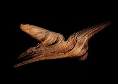 Driftwood - Week15 (Michael Koole - Vision Three Images) Tags: michaelkoole nikon d300 nikkor 35mmf2d sb600 strobist cls lowkey driftwood texture lakesuperior shoot52 week15